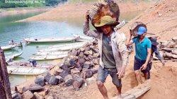 """Cảnh lạ: Hồ """"mọc"""" gỗ, dân đổ xô xuống cắt, kiếm 300 ngàn/ngày"""