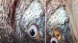 Dán mắt nhựa vào cá, chiêu trò gian lận hay cách bán cá thông minh
