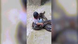 Bé trai Indonesia để trăn khổng lồ quấn quanh người