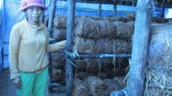 Xây dựng NTM ở Quảng Nam: Sức sống mới ở Bình Trị
