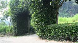 Đã mắt ngắm những cổng nhà xanh cây ôzô độc đáo ở xứ Lạng