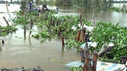 Vỡ đê bao ở Đồng Tháp, 148ha lúa sắp gặt chìm trong nước lũ