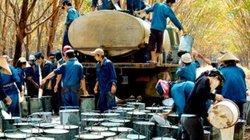 Tập đoàn Cao su Việt Nam chật  vật với các khoản nợ khủng