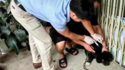 Phú Thọ: Xuất hiện hàng loạt ổ dịch chó dại, người dân lo lắng