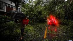 Bão Mangkhut tấn công Quảng Đông, cây cối ngã đổ hàng loạt