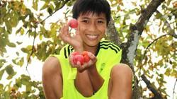 Những vườn hồng quả sai oằn cây, dân hái mỏi tay không xuể ở xứ Nghệ