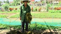 Tuyệt chiêu trồng rau sạch bằng rong của nông dân xứ Quảng