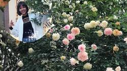 Vườn hồng vài nghìn gốc siêu quý 3.000m2 của hot girl 8x Thái Nguyên