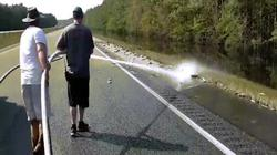 Hàng trăm cá chết rải khắp đường cao tốc Mỹ sau siêu bão Florence