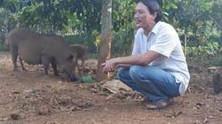 Clip: Kiếm bộn tiền nhờ thả trăm con lợn rừng trông vườn cây quý