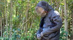 """Quảng Nam: Xuyên rừng thiêng nước độc săn loài """"ong tử thần"""""""