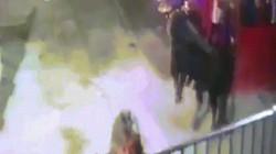 Khoảnh khắc bò tót dùng sừng lửa đâm chết người ở Tây Ban Nha