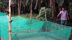 May lưới nuôi loài rắn ăn cá tạp, bán 380 ngàn đồng/ký