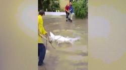 Mexico: Cá sấu mò vào thành phố sau bão khiến cư dân hãi hùng