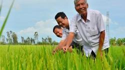 """Lão nông có 100 công đất """"say"""" trồng lúa giống, lãi 750 triệu/năm"""