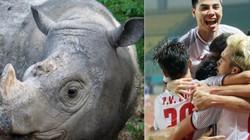 HI HỮU: Chú tê giác cực hiếm được đặt tên là… Olympic Việt Nam