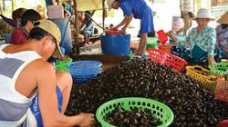Chợ quê An Giang mùa nước nổi: Nhiều rắn, cua, cá, ốc đồng