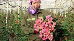 Lâm Đồng: Khi nhà nông liên kết với doanh nghiệp để làm giàu