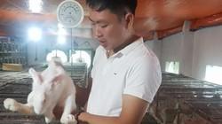 Lạ mà hay: Bỏ phố về quê nuôi thỏ bán cho Nhật, thu 60 triệu/tháng