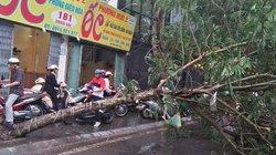 Ảnh: Cây đổ chắn ngang đường Hà Nội do ảnh hưởng của bão số 2