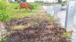 Vụ phun thuốc diệt cỏ ven QL 24: Kỷ luật Hạt trưởng và Hạt phó