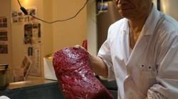 Đấu giá thịt cá voi tàu Nhật Bản lần đầu tiên đi săn được sau 31 năm