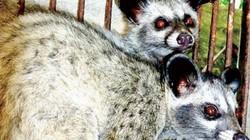 Nuôi loài thú 2 mắt đỏ như hạt lựu, cứ bán 1 con thu 1,7 triệu đồng