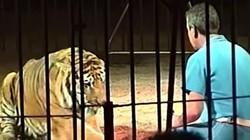 4 con hổ cắn người huấn luyện kinh nghiệm đến chết trong rạp xiếc ở Italia