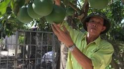 Trên trồng bưởi, dưới thả vịt, U70 xứ Thanh thu hàng trăm triệu/năm