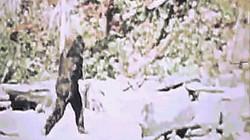 Video rõ ràng nhất về quái vật Chân to dạo bước trong rừng