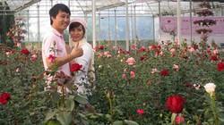 Làng triệu phú hoa hồng dưới chân núi LangBian