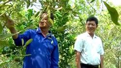 An Giang: Trồng cây hoang dại bán trái chạy như tôm tươi