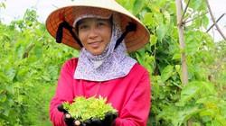 Trồng hoa thơm làm rau bán cháy hàng, nông dân bỏ túi 1 triệu/ngày