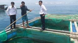Agribank Lý Sơn rót vốn giúp ngư dân bám biển