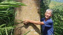"""""""Đại gia chân đất"""" Tây Bắc: Ngày ấy trồng gỗ, giờ có cả 1 rừng vàng"""