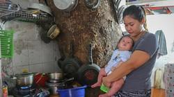 """Ảnh: Nhiều ngôi nhà ở Hà Nội """"sống chung"""" với cây cổ thụ"""