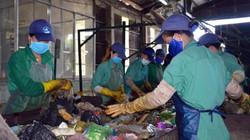 Nhà máy rác chôn xác thai nhi đề nghị nâng tiền hỗ trợ xử lý rác