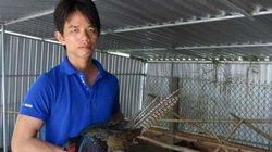 Kỹ sư điện tử về quê nuôi chim, gà độc, lạ, thu hàng trăm triệu