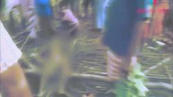 Ấn Độ: Bé gái 7 tuổi ngủ trong nhà, bị voi thò vòi qua lỗ hổng bắt ra ngoài giẫm chết