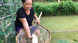 Nuôi loài cá quý ăn cỏ như dê, chỉ 1 ao bé tý mà thu 80 triệu đồng