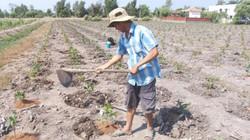 """Nông dân lo đổ nợ do """"liều"""" thuê đất dự án trồng mai"""