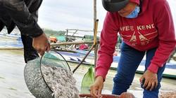Độc đáo nghề đánh bắt loài cá cơm trắng như bông trên hồ Trị An
