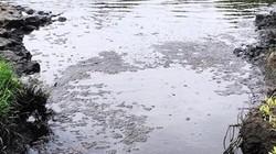 Phú Thọ: Xử phạt MK Noah Vina 300 triệu đồng vì vi phạm môi trường