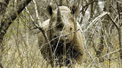 Khủng hoảng kinh tế, chính phủ mang cả voi, sừng tê giác bán lấy tiền
