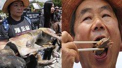 Hàn Quốc: Một bên biểu tình phản đối ăn thịt chó, một bên đánh chén ngon lành trêu tức