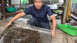 """Chuyện lạ: Nhặt rác bẩn nuôi loài ruồi đẻ ra thứ trứng """"vàng"""""""
