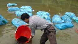 Trung ương Hội NDVN hỗ trợ nông dân Yên Bái 11.000 con cá giống
