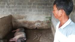 Ninh Bình: Từ tỷ phú giàu nhất huyện thành con nợ vì dịch tả lợn