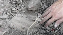Vụ nhà máy rác ở Cà Mau chôn xác thai nhi: Không khởi tố vụ án hình sự