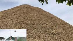 """Quảng Ngãi: Dăm gỗ ứ như núi, doanh nghiệp chế biến đang """"thở oxy"""""""